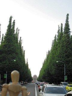 見事な銀杏並木