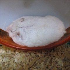 最近はよくこんな感じで寝ている