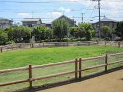 養生中の芝生が牧場みたい