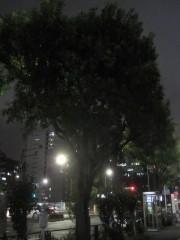 他の木ではなく、この木