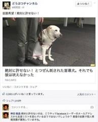 盲導犬 「絶対に許せない!」に要注意!(神田 敏晶)~Yahoo!ニュース