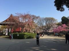 寛永寺清水観音堂は、すぐにわかった