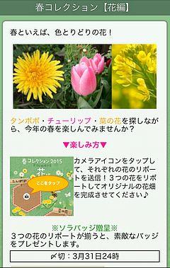 春の花を集める企画