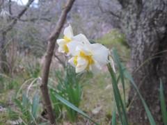 綺麗な花が咲いている
