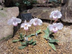 雲南省の植物…