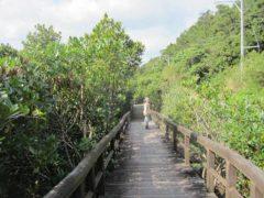 マングローブの中を進む遊歩道