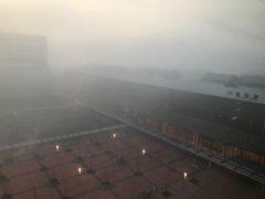朝は霧に覆われていた