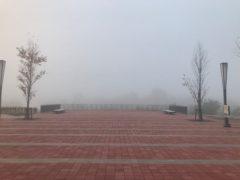 今朝は真っ白