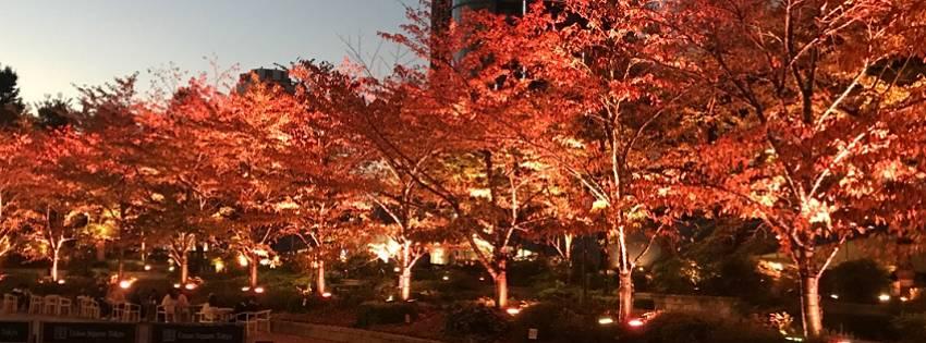 秋らしいといえば秋らしい
