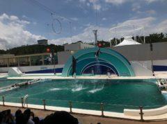 イルカたちのパフォーマンス