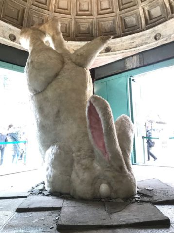 頭がめり込んでいるアナウサギ