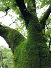 こんな木があったんだ…