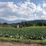 嬬恋村らしい風景