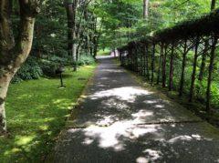 森の中を歩いて行く感じ