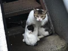 にらみを利かせる母猫