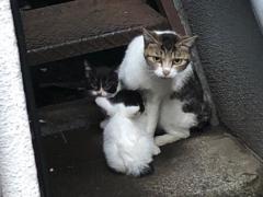 母猫の後ろからりょっこりと。