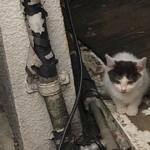 たくましく生きる猫